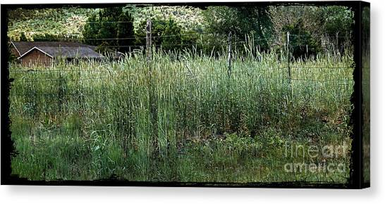 Field Of Grass Canvas Print