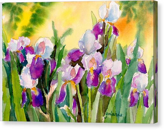 Field Of Irises Canvas Print