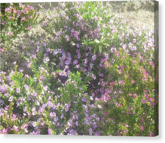 Smallmouth Bass Canvas Print - Field Of Small Flowers by Anamarija Marinovic
