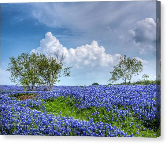 Bluebonnets Canvas Print - Field Of Texas Bluebonnets by David and Carol Kelly