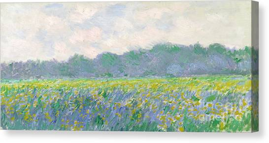 Irises Canvas Print - Field Of Yellow Irises At Giverny by Claude Monet