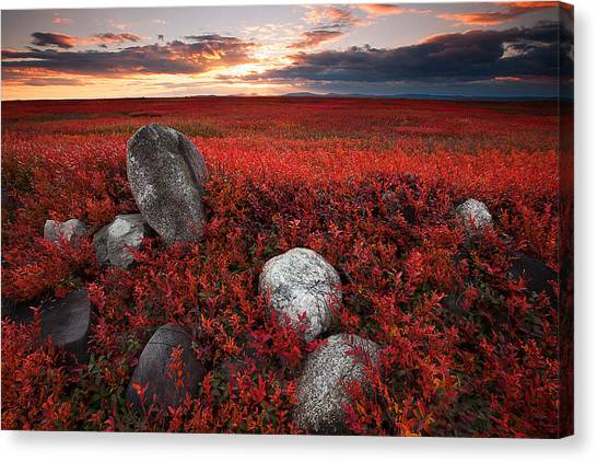 Fields Of Autumn Canvas Print