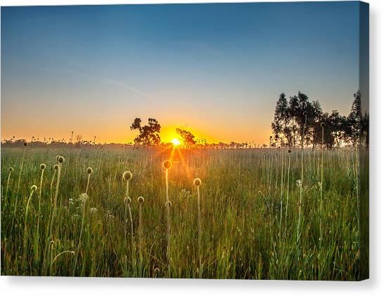 Setting Sun Canvas Print - Fields Of Gold by Az Jackson