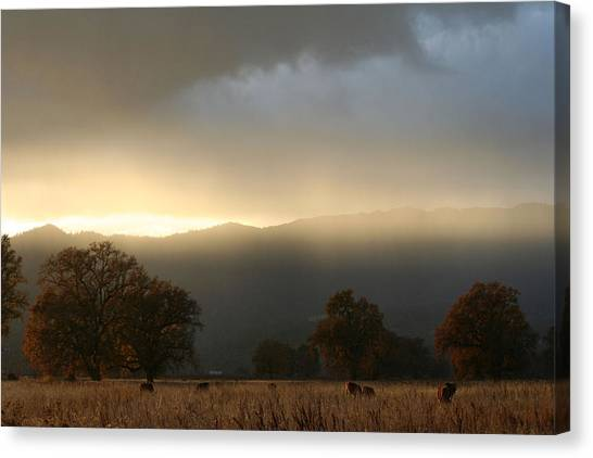 Fields Of Gold Canvas Print by Holly Ethan