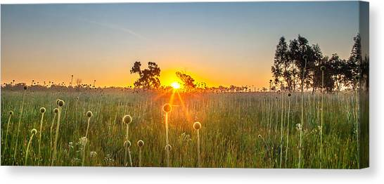 Last Canvas Print - Fields Of Gold Panorama by Az Jackson