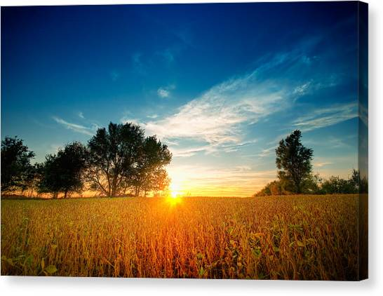 Fields Of Gold Canvas Print by Ryan Heffron