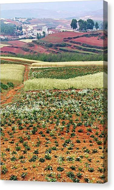 Fields Of The Redlands - 2 Canvas Print