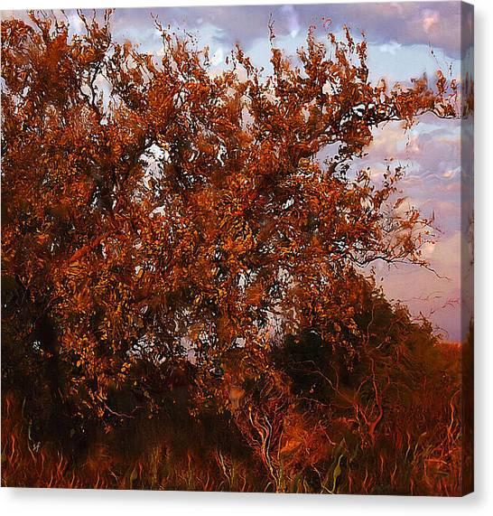 Fiery Elm Tree  Canvas Print