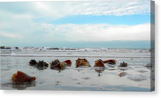 Fighting Conches Canvas Print