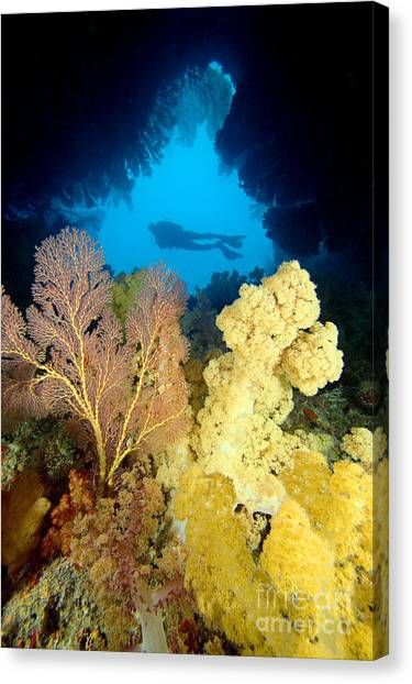 Underwater Caves Canvas Print - Fiji Underwater by Dave Fleetham - Printscapes