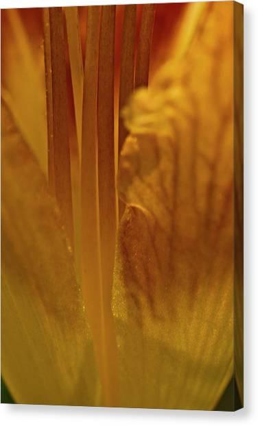 Filaments Of Life Canvas Print