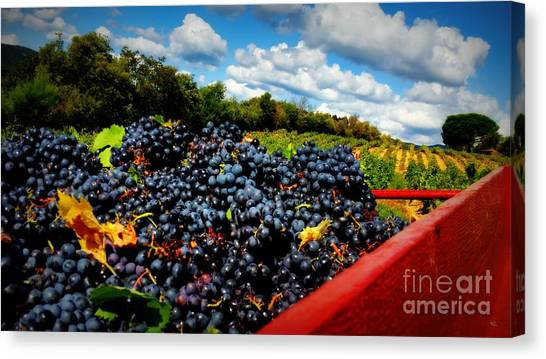 Filling The Red Wagon Canvas Print