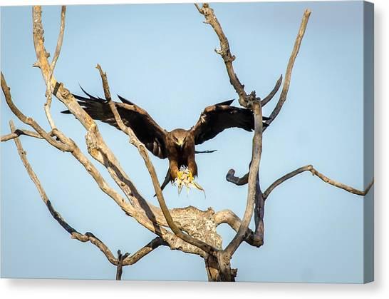 Eagles Canvas Print - Final Approach by Krishnaraj Palaniswamy