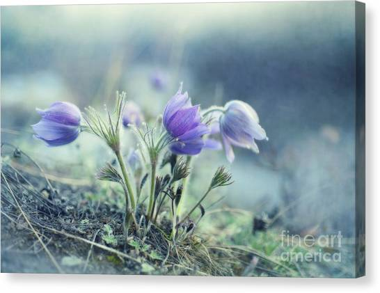 Yukon Canvas Print - Finally Spring by Priska Wettstein