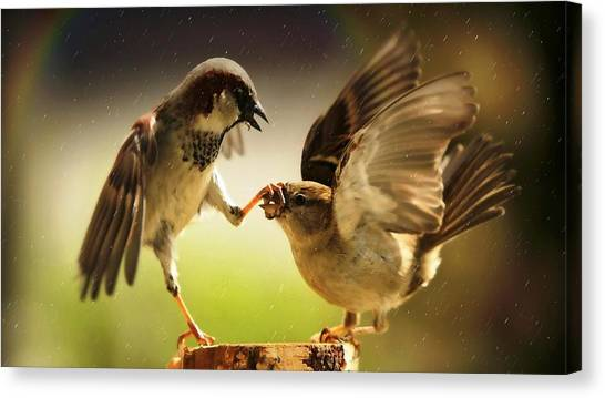 Sparrows Canvas Print - Finch by Jackie Russo