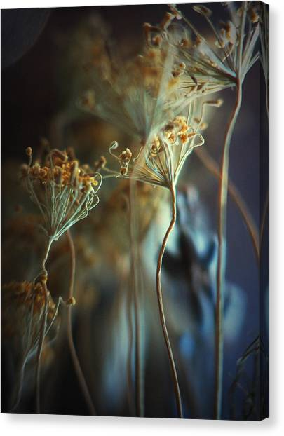 Fingertips... Canvas Print