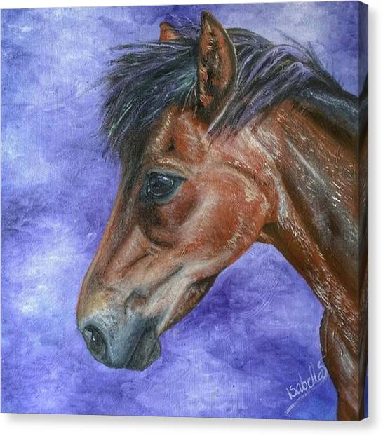 Ponies Canvas Print - Finished And Up For Sale As Products To by Abbie Shores