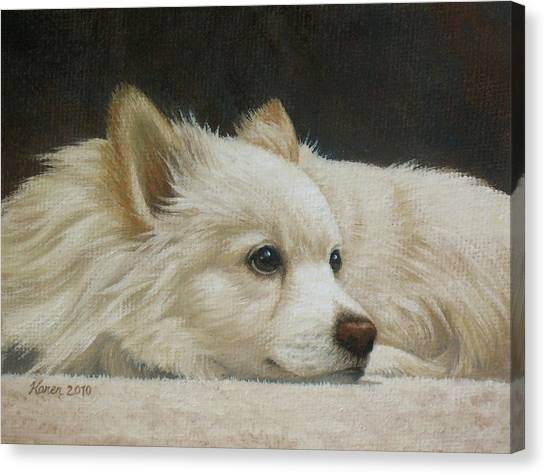 Pomeranians Canvas Print - Finley by Karen Coombes