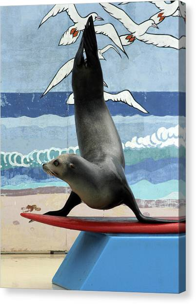 Fins Up Canvas Print