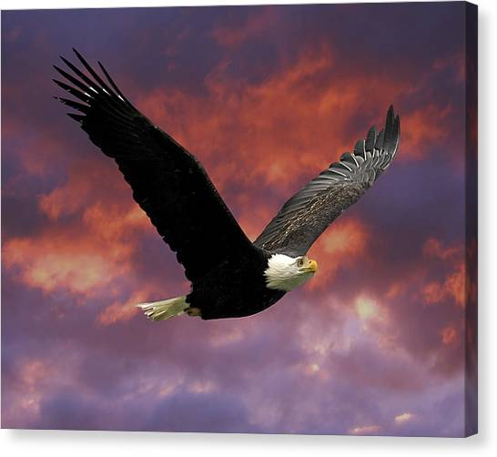 Flyer Canvas Print - Fire Cloud And Eagle by Clarence Alford