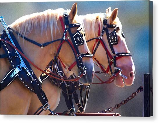 Fire Horses Canvas Print