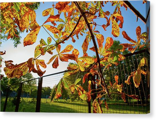 Canvas Print featuring the photograph Fire Leaves by Tgchan