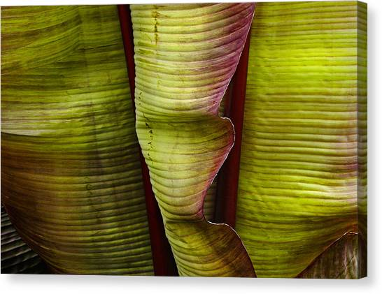 Fire Palm Iv Canvas Print
