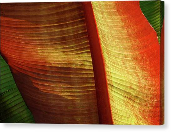 Fire Palm Canvas Print