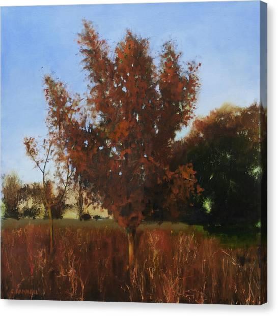 Fire Tree 3 Canvas Print