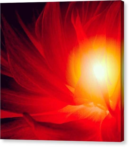 Imaginative Canvas Print - Fireflower!  #flower #flowers #floral by Elizabeth Whycer