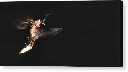 Firefly In Flight Canvas Print