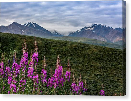 Fireweed In Denali Canvas Print