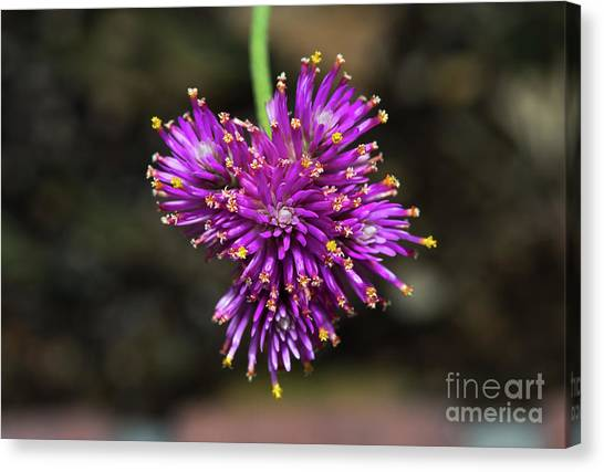 Canvas Print featuring the photograph Fireworks Flower by Michael Moriarty