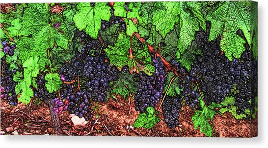 First Came The Grape Canvas Print