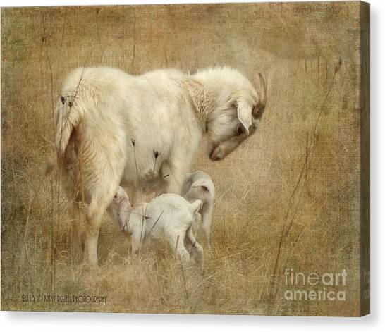 First Day Of Life Canvas Print
