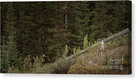 Canvas Print featuring the photograph First Howl by Brad Allen Fine Art