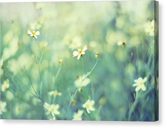 Gallery Wrap Canvas Print - First Impression by Amy Tyler