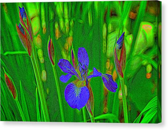 First Iris To Bloom Canvas Print