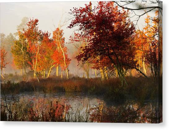 First Light At The Pine Barrens Canvas Print