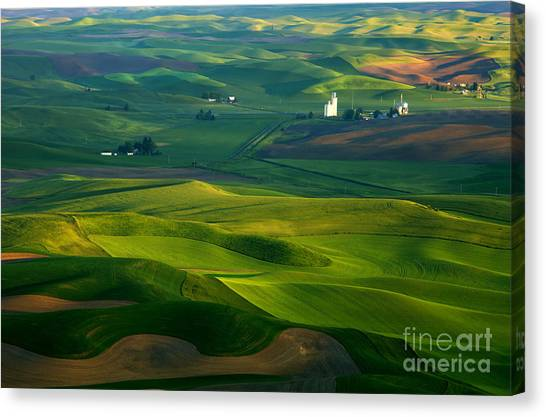 Rolling Hills Canvas Print - First Light On The Palouse by Mike  Dawson