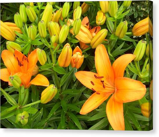 First Orange Lillies Canvas Print by Ellen B Pate