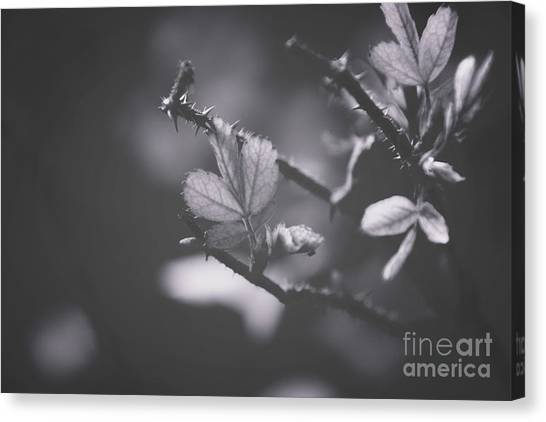 First Signs Of Spring -georgia Canvas Print