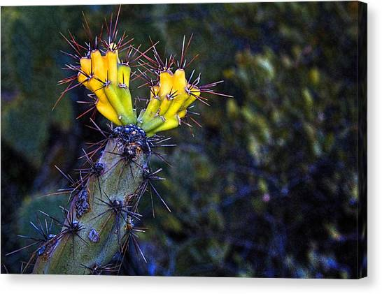 First Signs Of Spring On The Sonoran Desert Canvas Print