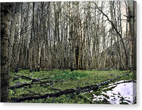 Wilderness Canvas Print - First Snow by Danielle Basler
