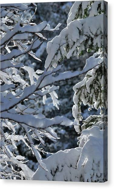 First Snow II Canvas Print