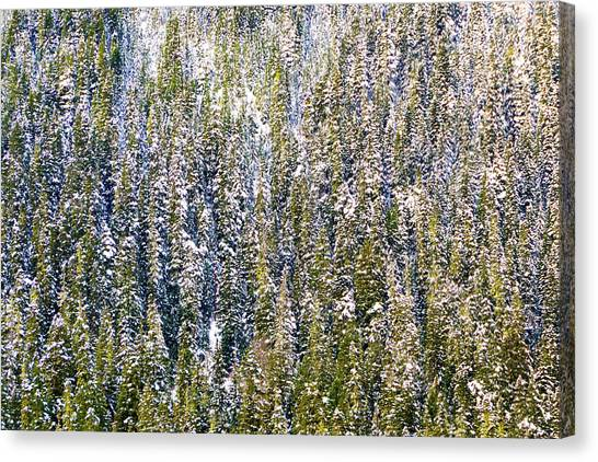 First Snow On Trees Canvas Print