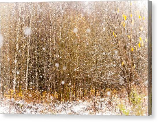 First Snow. Snow Flakes I Canvas Print