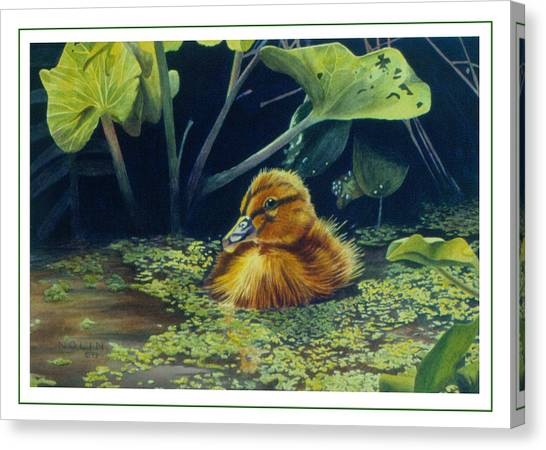 First Spring - Mallard Duckling Canvas Print