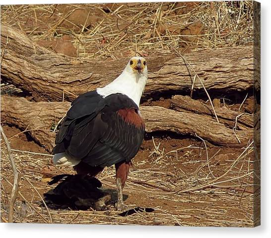 Fish Eagle Canvas Print