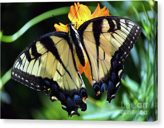 Canvas Print featuring the photograph Fish Eye Butterfly by Patti Whitten